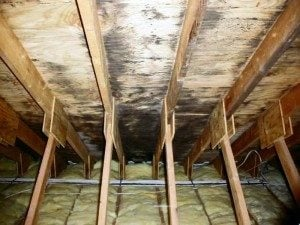 Black-Mold-Attic-300x225