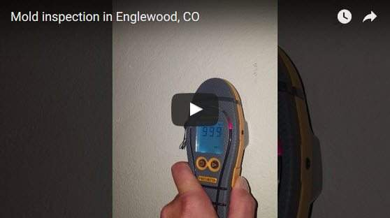 mold inspection englewood