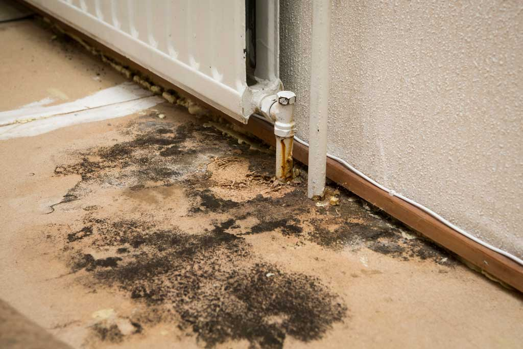 Abbotts Fire and Flood Colorado mold damage and removal
